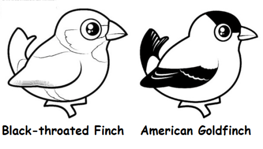 cute-american-birds-coloring-pages