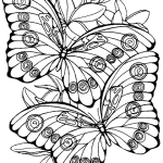 intricate-butterfly-drawing