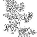 zentangle-leaves-coloring-online