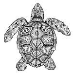 turtle-mandala-coloring-page-printable