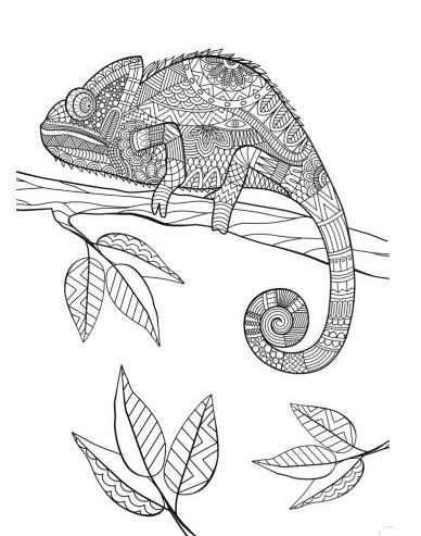 Animal Mandala Chameleon Coloring Pages Printable