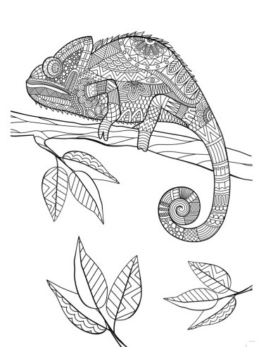 Animal Mandala Chameleon Coloring Pages Printable
