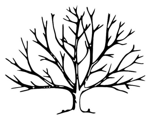 bare tree coloring page uncover plant coloring
