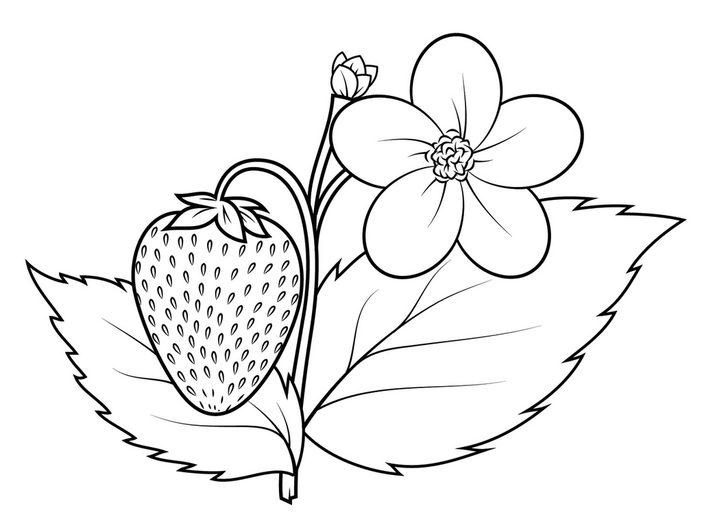 Strawberry Plant Coloring Sheet