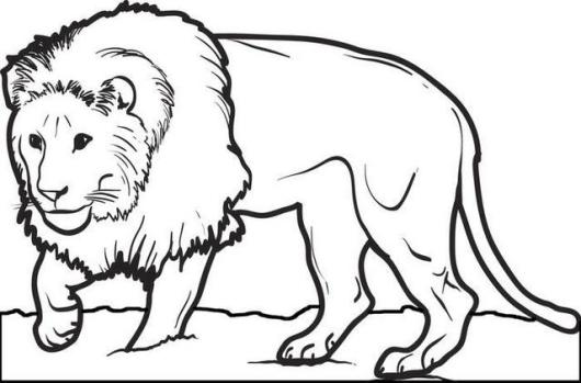 lion coloring printable page