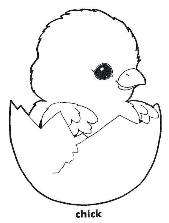 Beautiful Coloring Pages of A variety of Chicken Designs