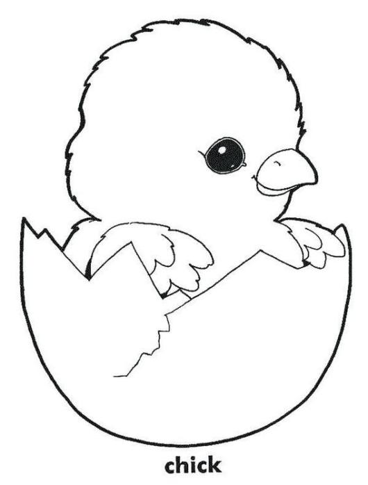 little chicken coloring pages for kids