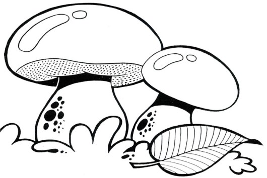 Top 11 Fascinating Mushrooms Species Coloring Pages Coloring Pages