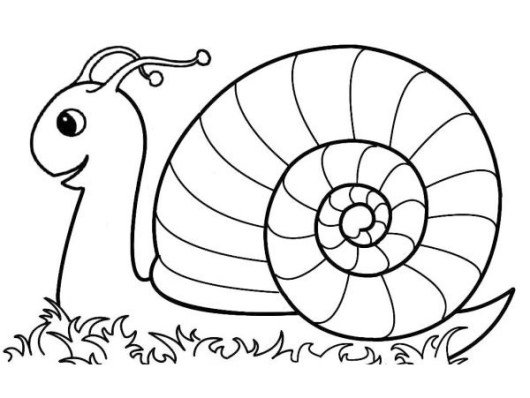 top snail coloring and drawing sheet