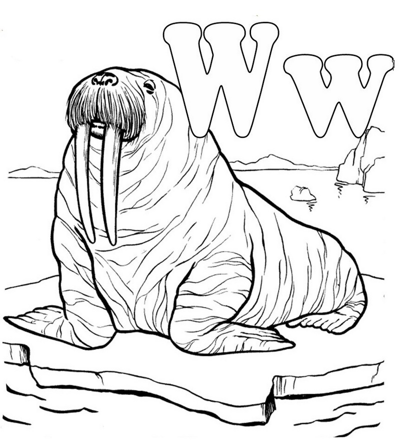 letter w for walrus coloring picture
