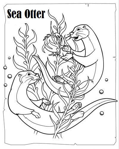 otter carnivorous mammals coloring sheet