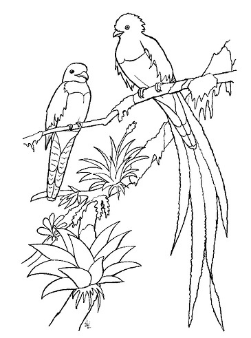 quetzal in forest coloring page quetzal bird from trogon family coloring sheet