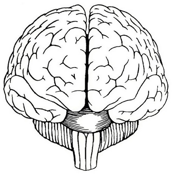Human Brain Lineart Coloring Picture
