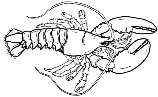giant lobster coloring sheet for little kids - Lobster Coloring Page