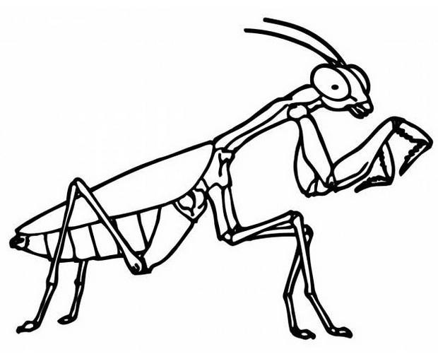 perfect grasshopper coloring page design