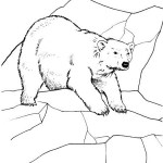 the largest land carnivores polar bear coloring page