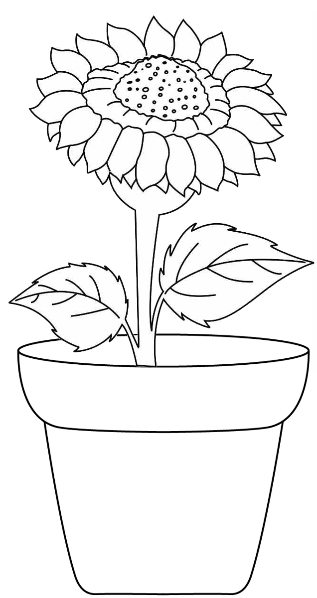 Sunflower growing in a pot coloring page