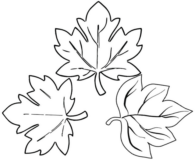 sugar maple coloring page of leaves