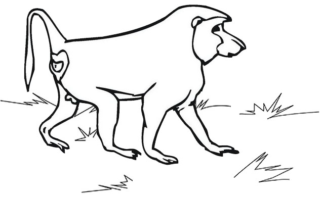 Baboon Male Coloring Page