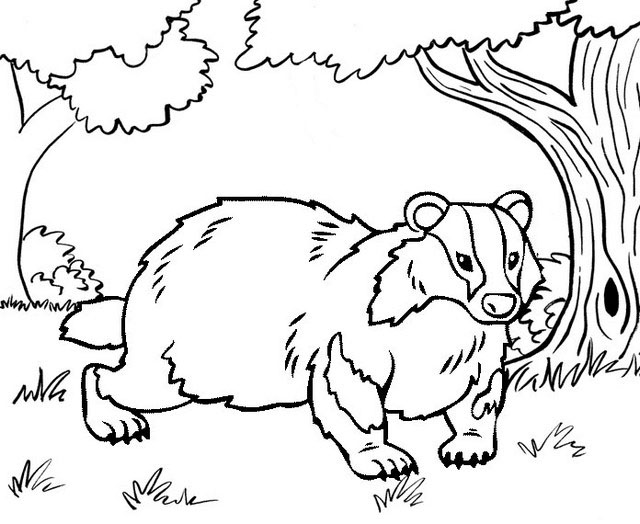 Best Badger Coloring Page for Kid