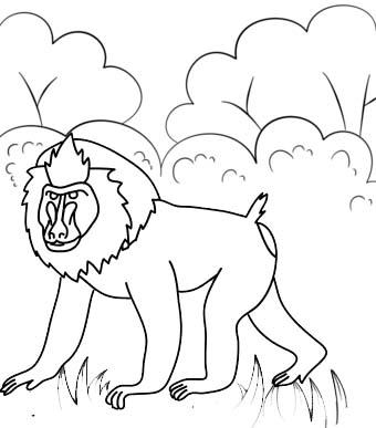 Cute Baboon Cartoon Coloring Page