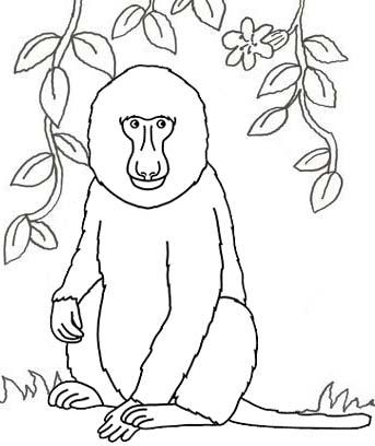 Mandrill Baboon Coloring Page