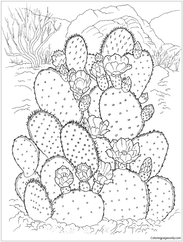 Flowering Cactus On The Desert Coloring Pages - Deserts Coloring