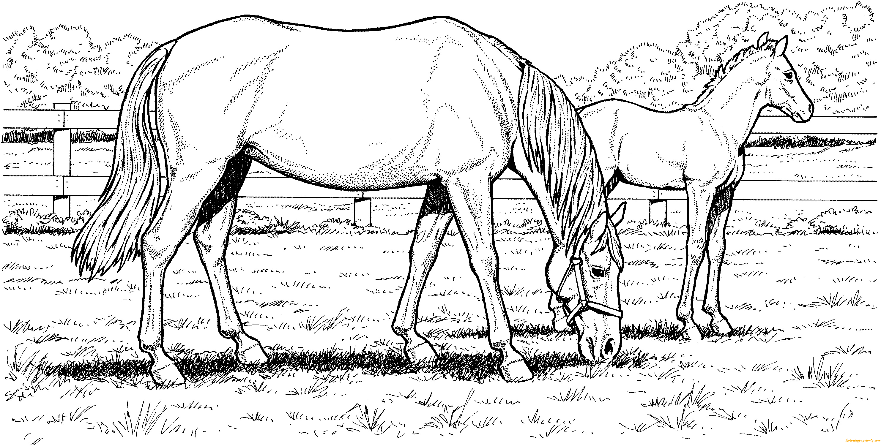 Grazzing Mare Horse Hard Coloring Page Free Coloring Pages Online