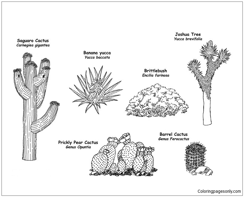 The Wild Flowering Plants Of The Desert Coloring Page