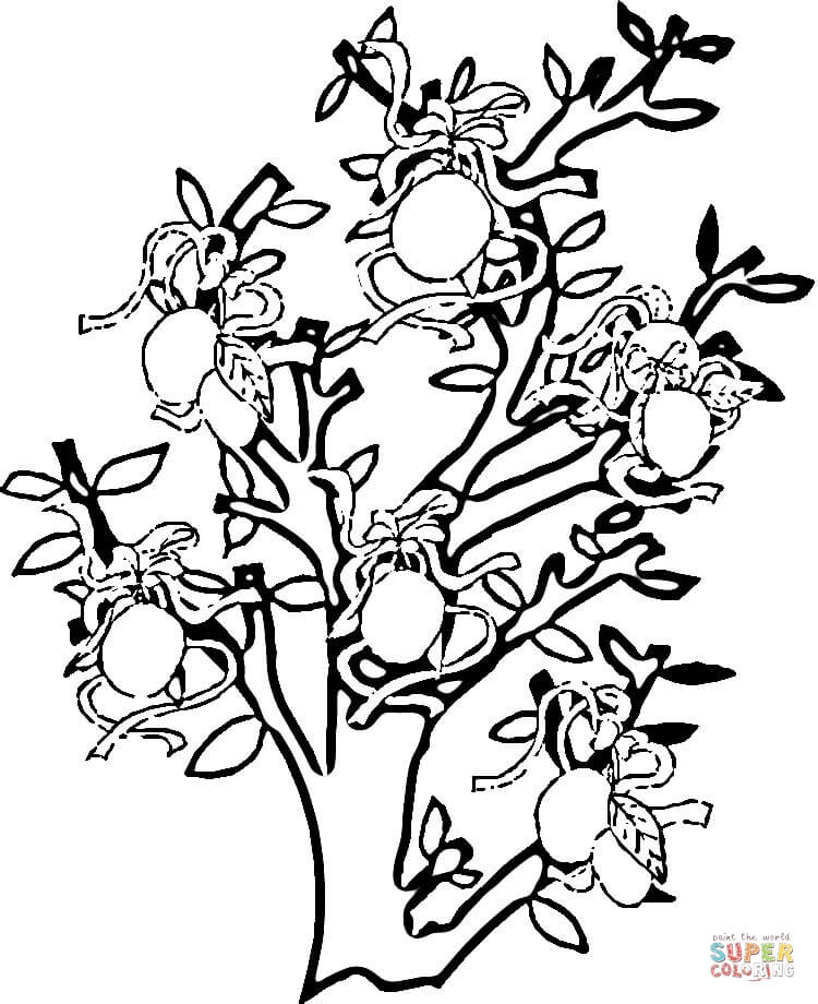 Pear tree coloring pages download and print for free