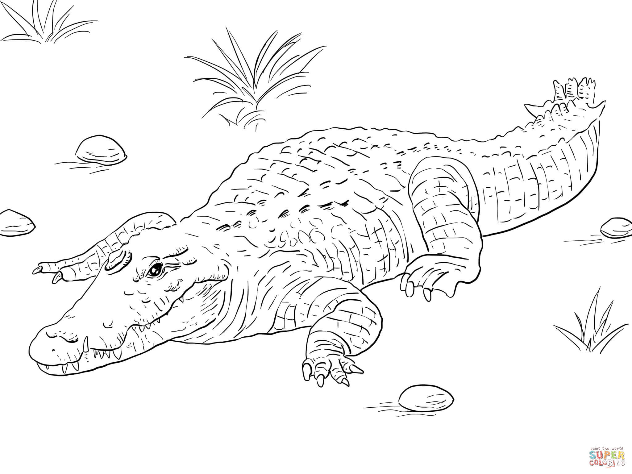 Alligators And Crocodiles Coloring Pages Download And