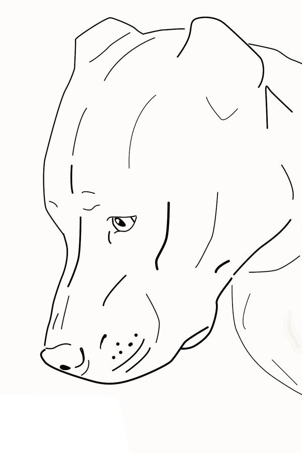 American Pit Bull Terrier Coloring Page Pit Bull Pics t