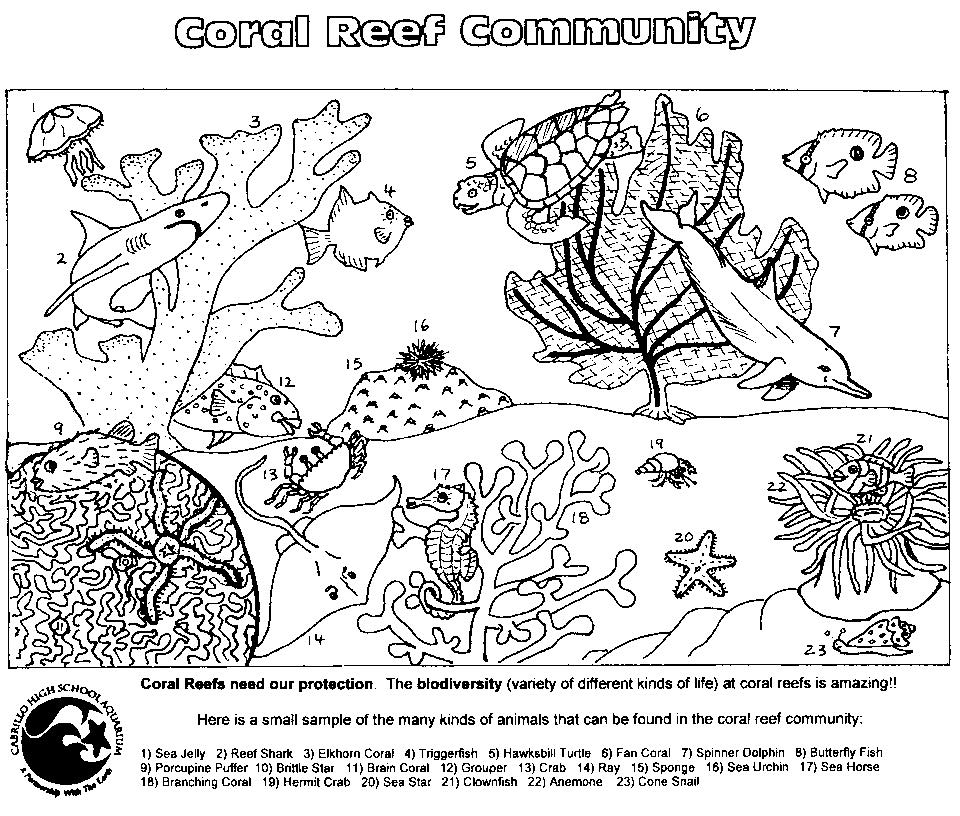 coral reef food chain diagram dual starter wiring coloring pages to download and print for free
