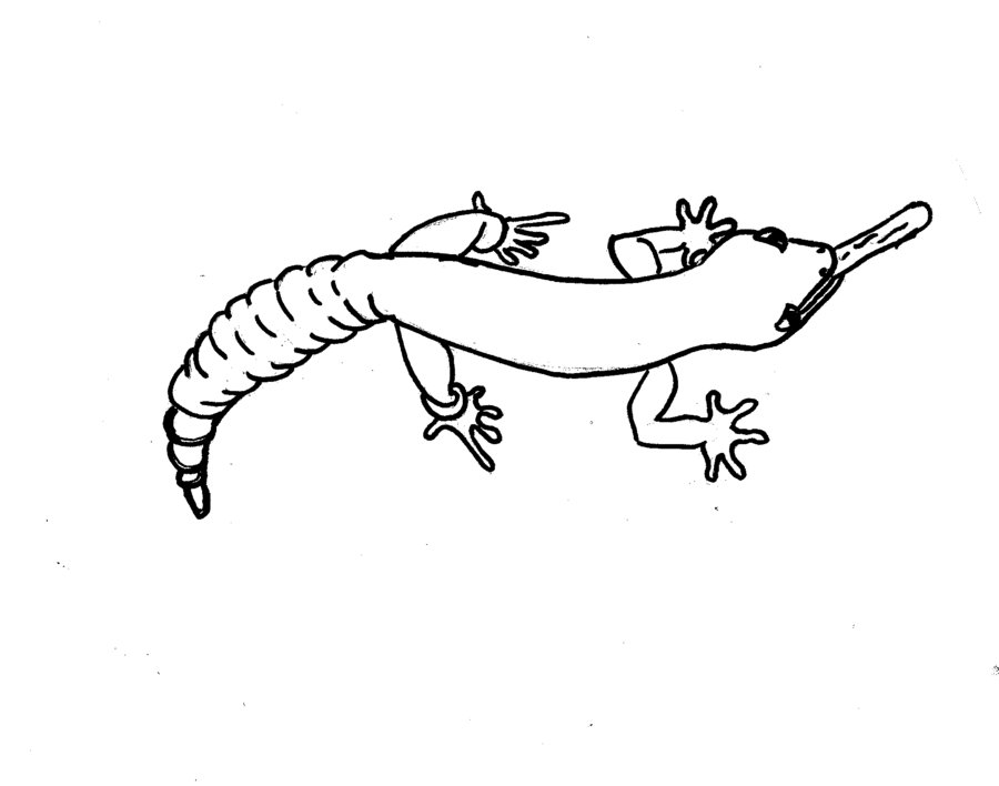 Cartoon Gecko Coloring Pages Download And Print For Free