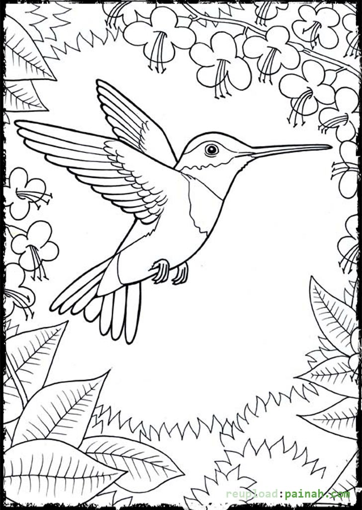 Hummingbird coloring pages to download and print for free
