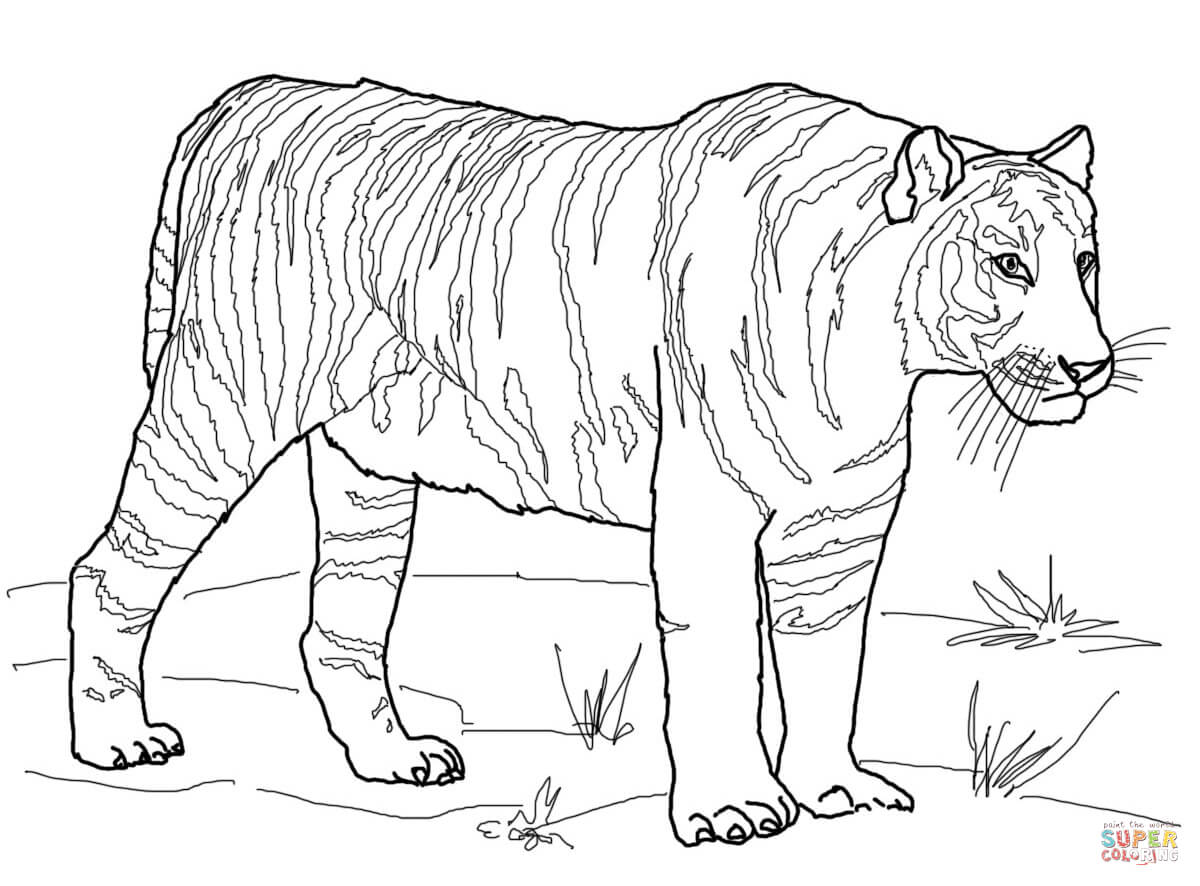 Tiger Coloring Pages To Download And Print For Free