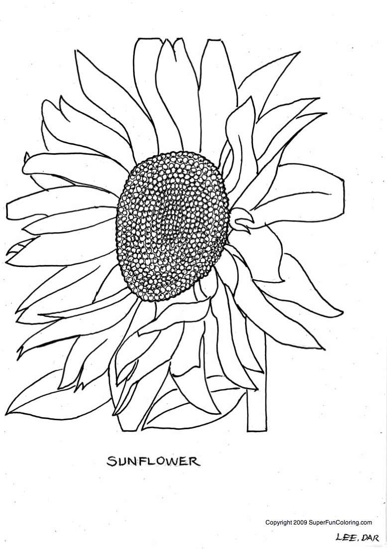 Sunflower coloring pages to download and print for free