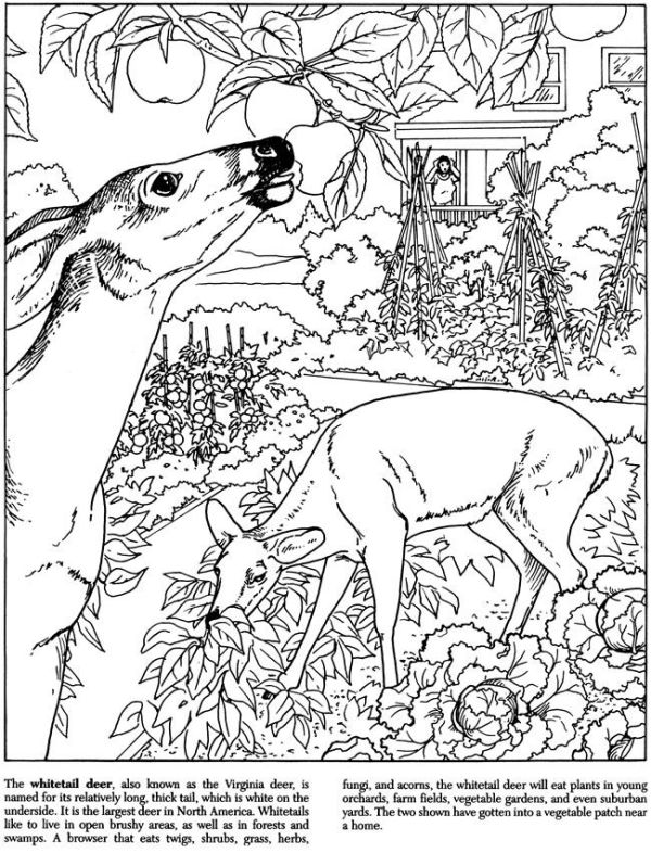 25 Landscape Coloring Page Tree And Grass Pictures And Ideas On Pro