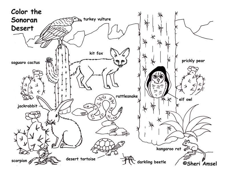 Desert coloring pages to download and print for free