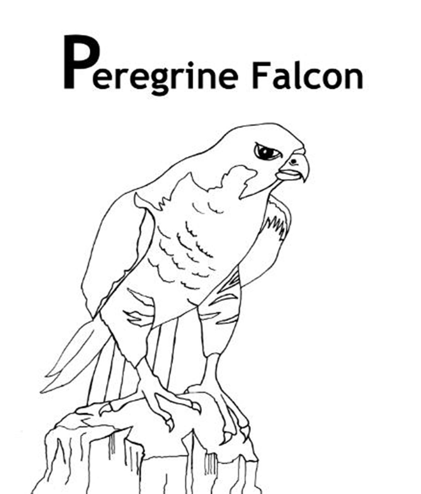 peregrine falcon coloring pages for adults