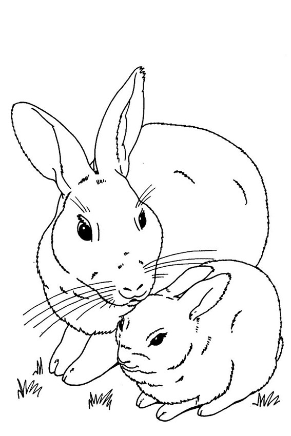 Baby bunnies coloring pages download and print for free