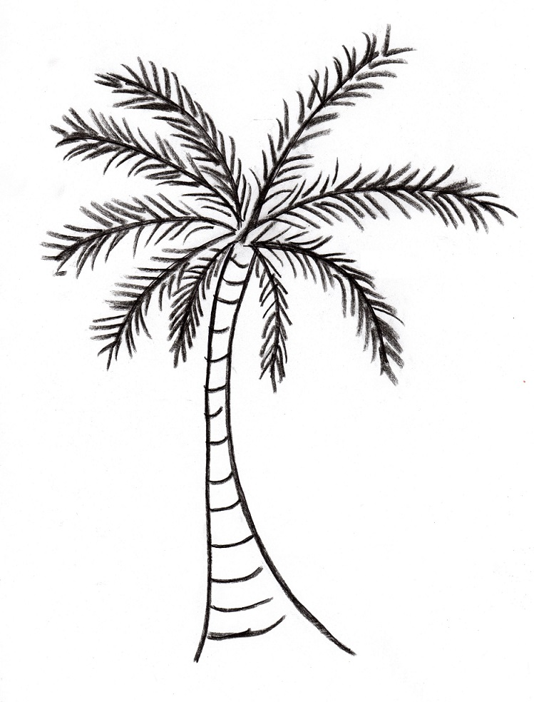 Date palm coloring pages download and print for free