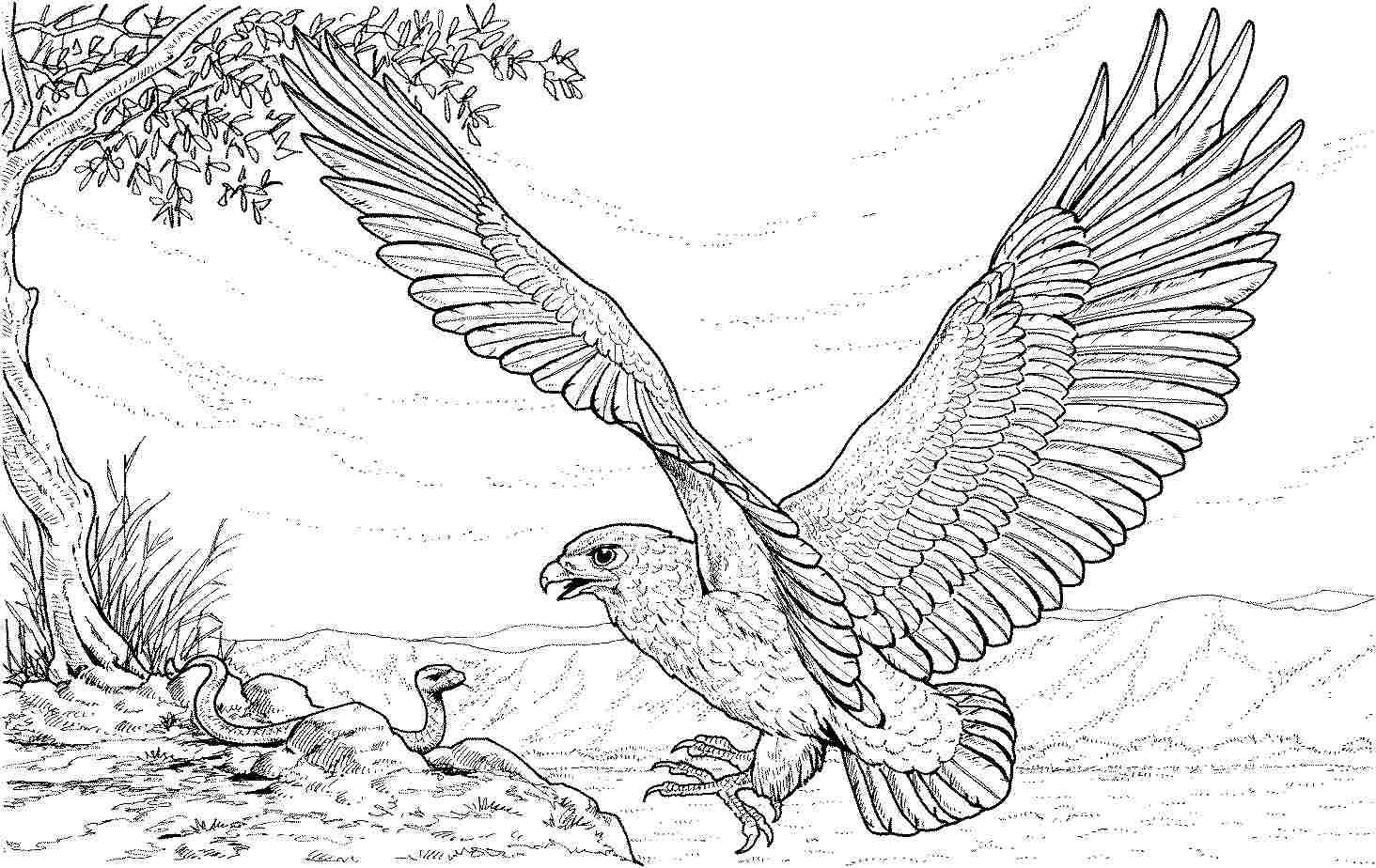 Eagle Dragon Color Pages