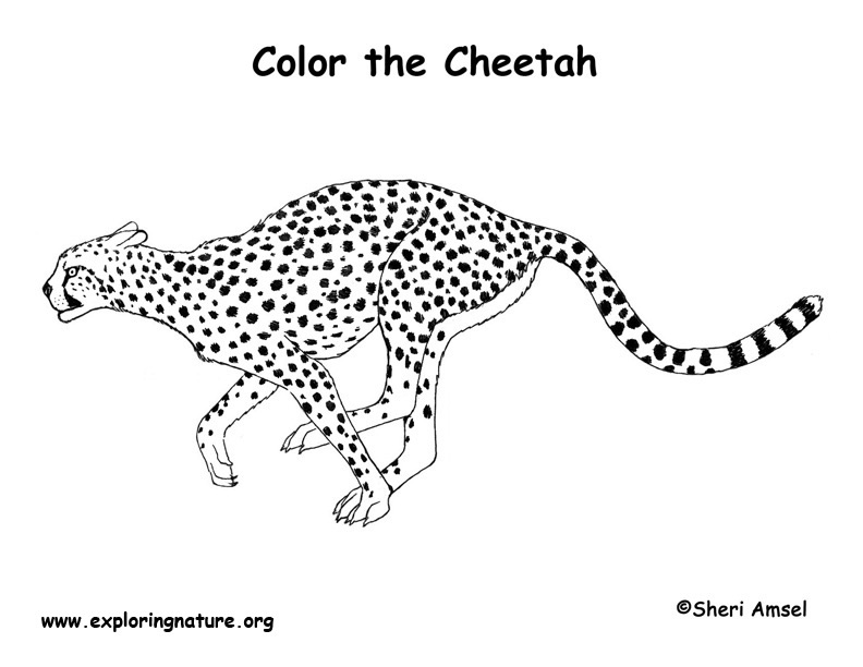 bumble bee diagram 2000 civic radio wiring cheetah coloring pages to download and print for free