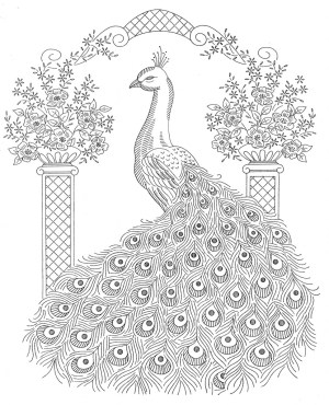 peacock coloring pages animal colouring adult peacocks adults mandala colour birds patterns trace embroidery