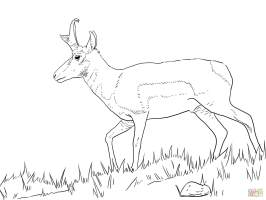 Springbok coloring pages download and print for free
