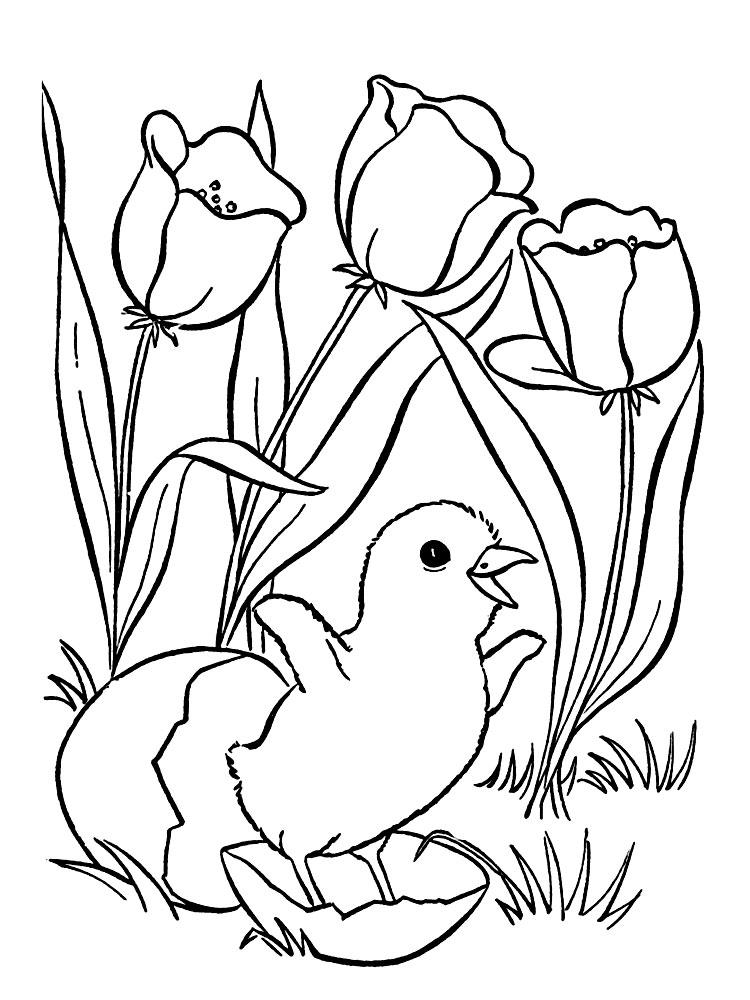 Draw So Cute Printable - Novocom.top