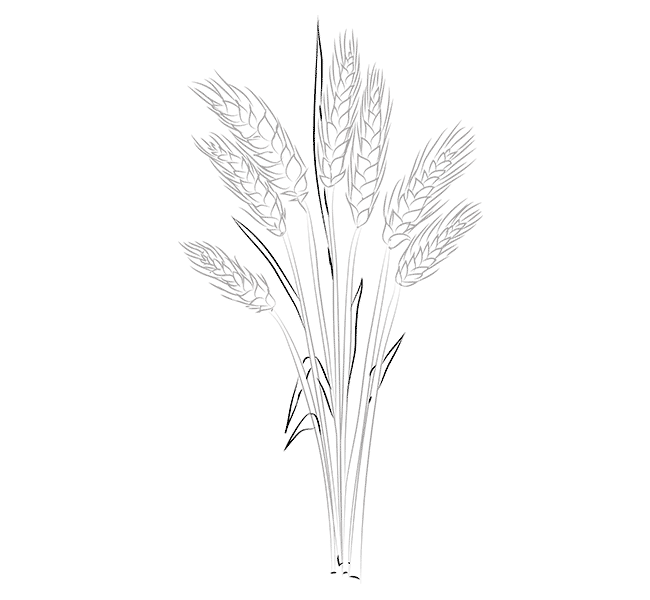 Wheat Coloring Pages To Download And Print For Free