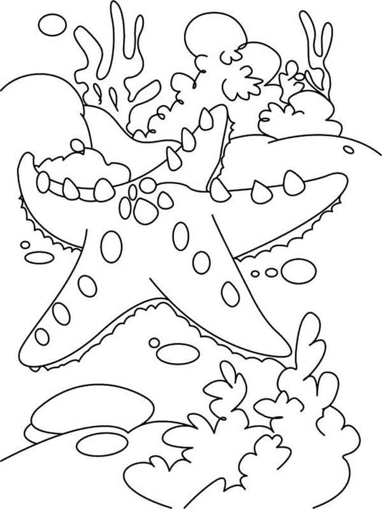 Starfish coloring pages to download and print for free