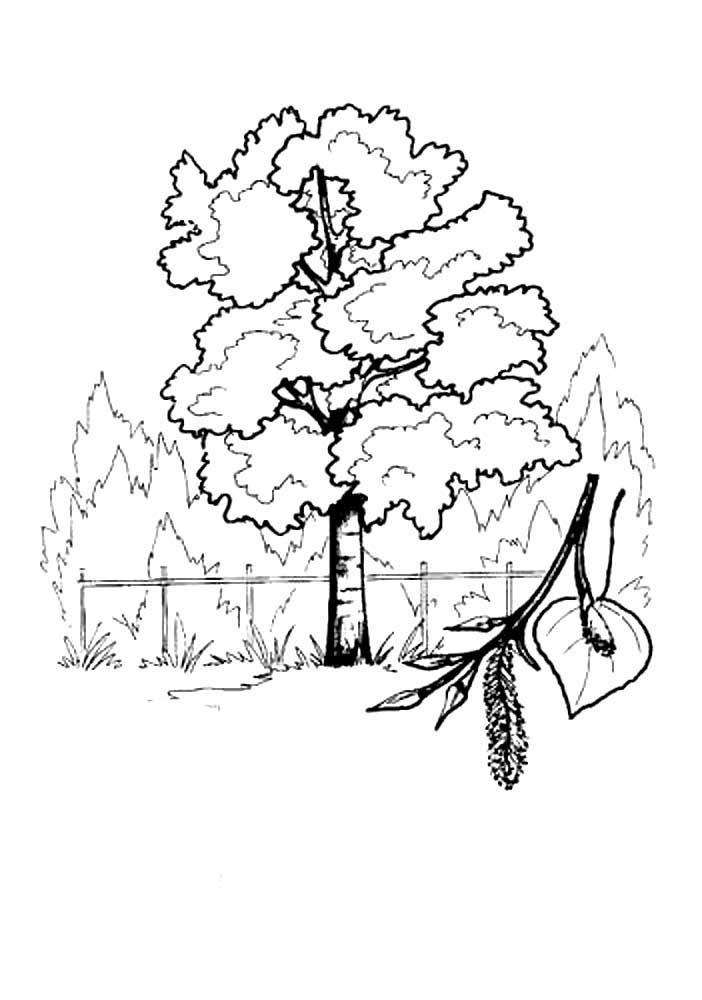 Poplar coloring pages to download and print for free